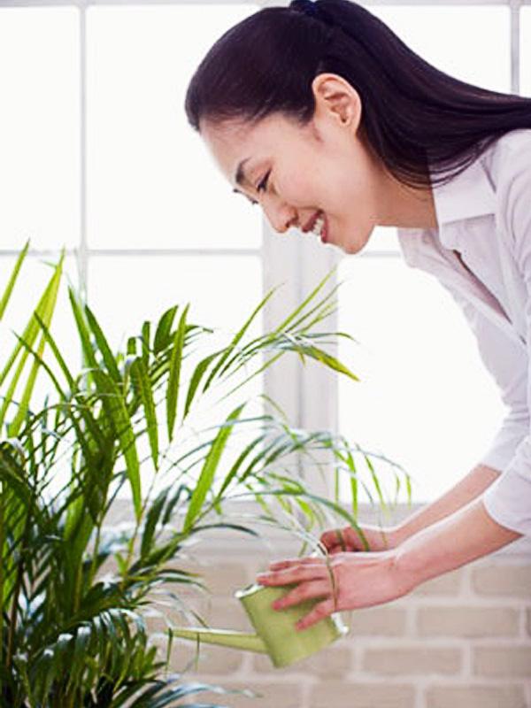 Dịch vụ chăm sóc cây xanh văn phòng tại Hà Nội
